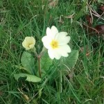 Self seeded in the grass
